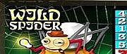 wild-spider-1